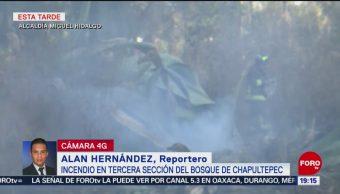 FOTO: Incendio en la Tercera Sección del Bosque de Chapultepec, 17 febrero 2019