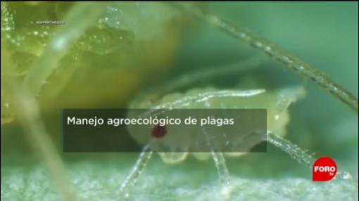 FOTO: IPN trabaja en manejo agroecológico de plagas en cultivos, 2 febrero 2019