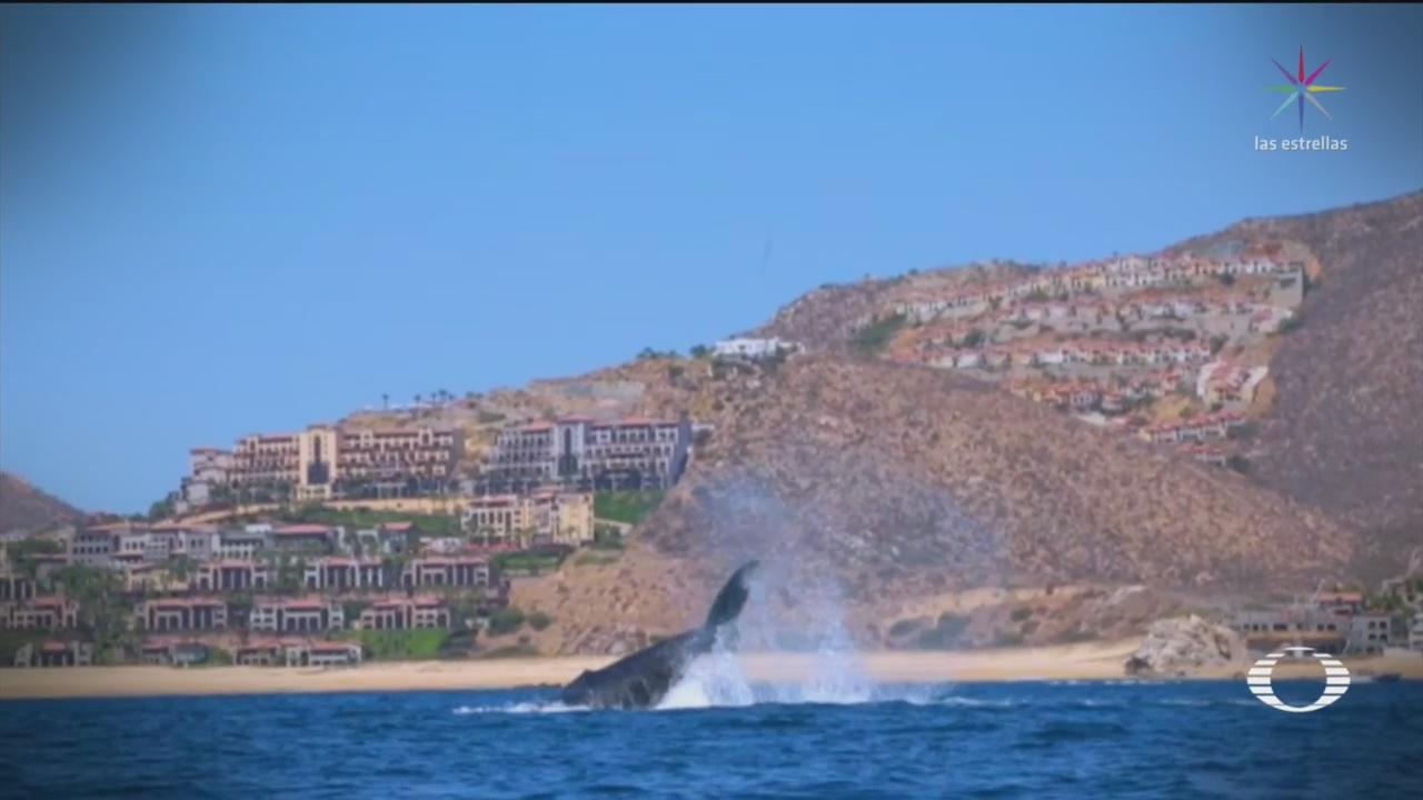 Foto: Ballenas Santuarios Baja California Avistamientos 27 de Marzo 2019