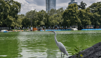 Foto: Bosque de Chapultepec, 4 de octubre de 2018, Ciudad de México, México