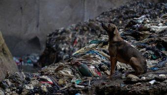 """Foto: Un perro sentado en """"La Mina"""", un basurero en la ciudad de Guatemala, Guatemala. El 5 de septiembre de 2016"""