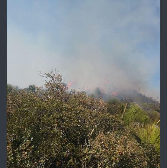 controlan dos incendios forestales en tamaulipas uno mas sigue activo