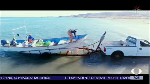 Nuevo plan para salvar a la vaquita marina molesta a pescadores