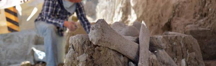 foto Encuentran más restos de mamut en Tultepec 13 marzo 2019