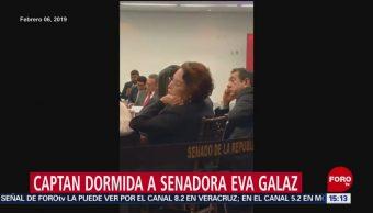 Foto: Senadora Eva Galaz se duerme durante reunión plenaria de Morena