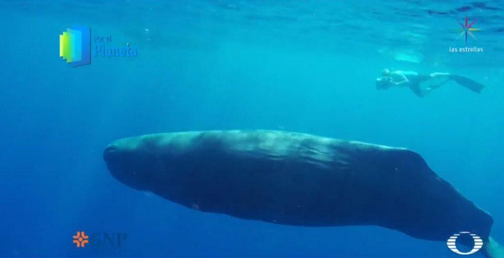Foto El cachalote, un gigante del mar 30 abril 2019