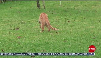 FOTO: Escuelas para gatos ya son una realidad en México, 20 ABRIL 2019