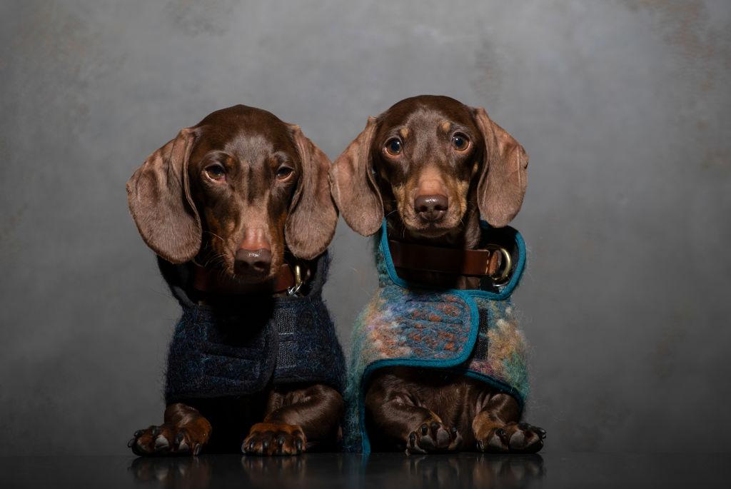 foto Perros podrían portar nuevo mortal virus para los humanos 24 de marzo de 2019