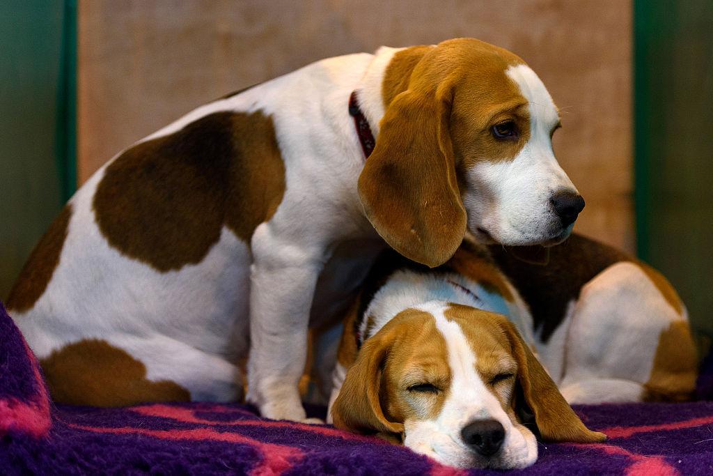 foto Los perros son capaces de detectar el cáncer 13 de marzo de 2016