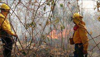Combaten tres incendios forestales en San Luis Potosí