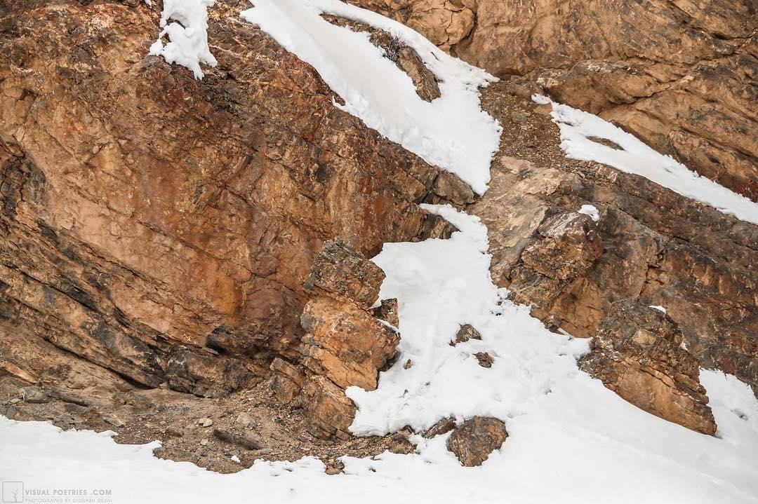 foto leopardo de las nieves el arte del camuflaje 2