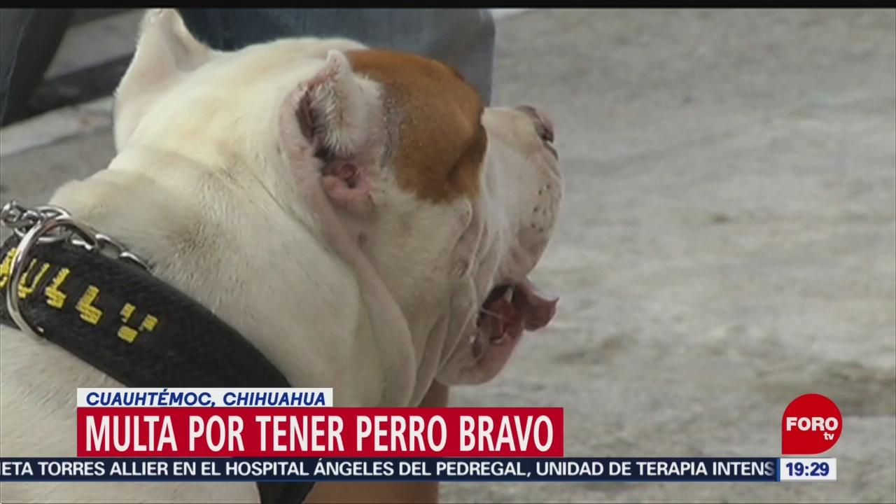 Foto: Los multan por tener perro bravo en Chihuahua