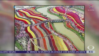Millones de tulipanes florecen en China