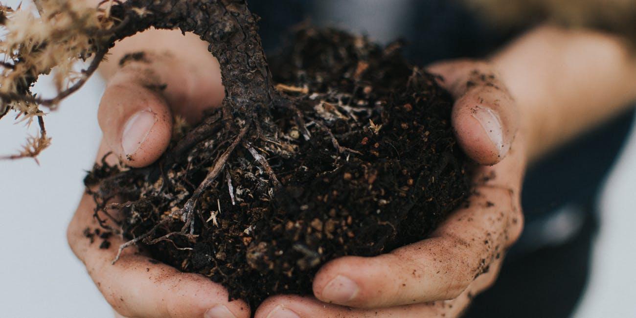 Nueva ley permite convertir cadáveres humanos en abono