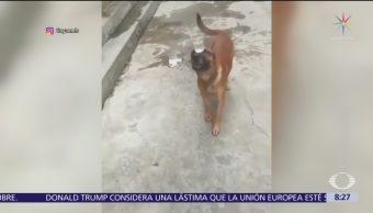 Perro equilibrista se vuelve viral en redes sociales
