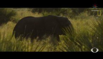 Foto: Rehabilitan Parque Nacional Gorongosa Mozambique Elefantes 25 de Abril 2019
