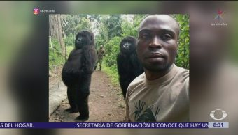 Selfie de guardabosques congoleño con dos gorilas se hace viral