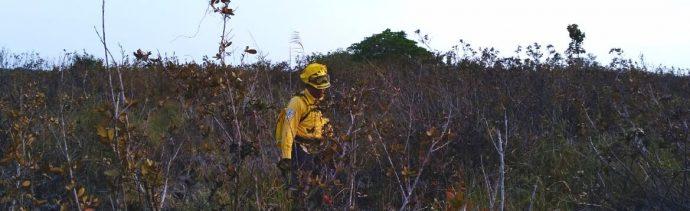 Foto: No hay afectación de manglar tras incendio, 16 de abril 2019. Twitter @CONAFOR