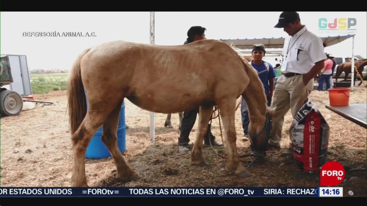 FOTO: Asociación civil crea programa en favor de los equinos de trabajo