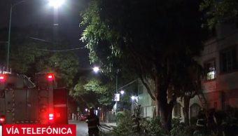 Foto:Bomberos de la Ciudad de México trabajaron en la caída de un árbol, 2 mayo 2019