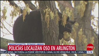 Capturan a oso que merodeaba a la población de Arlington, EU