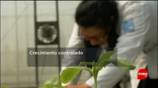 FOTO: ¿Cómo crear cultivos más eficientes?, 4 MAYO 2019
