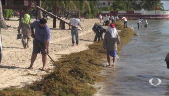 Foto: Limpieza Sargazo Playas Quintana Roo 20 Mayo 2019