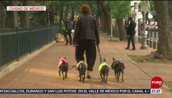 Foto: Consejos Recomendaciones Mascotas Contingencia Ambiental 16 de Mayo 2019
