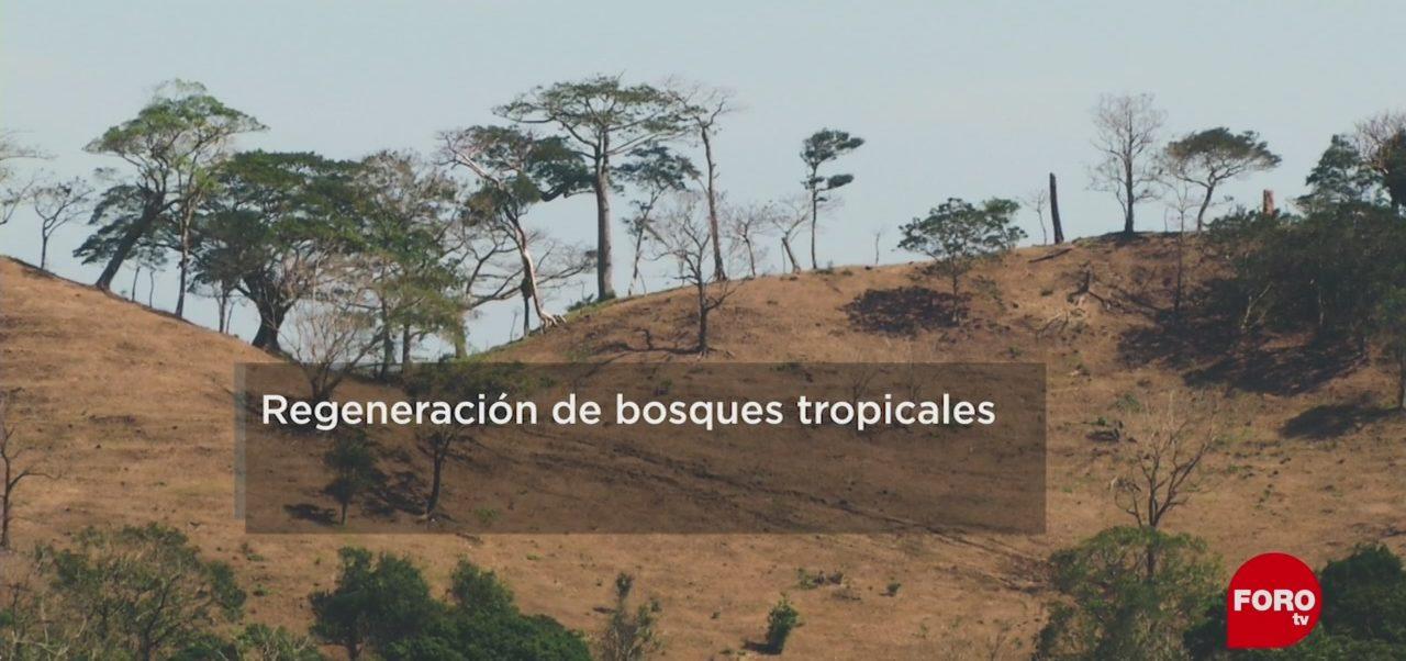 FOTO: ¿Cuánto tarda la regeneración de bosques tropicales?, 18 MAYO 2019