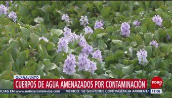 FOTO: Cuerpos de agua amenazados por contaminación en Guanajuato, 18 MAYO 2019