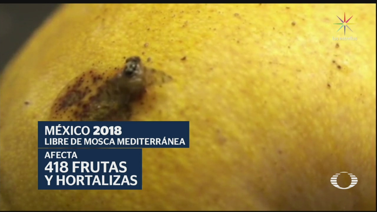 Foto: Manzanillo Colima Mosca Mediterránea 27 Mayo 2019