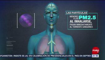 Foto: Efectos Contaminación Cuerpo Humano Cerebro 16 de Mayo 2019