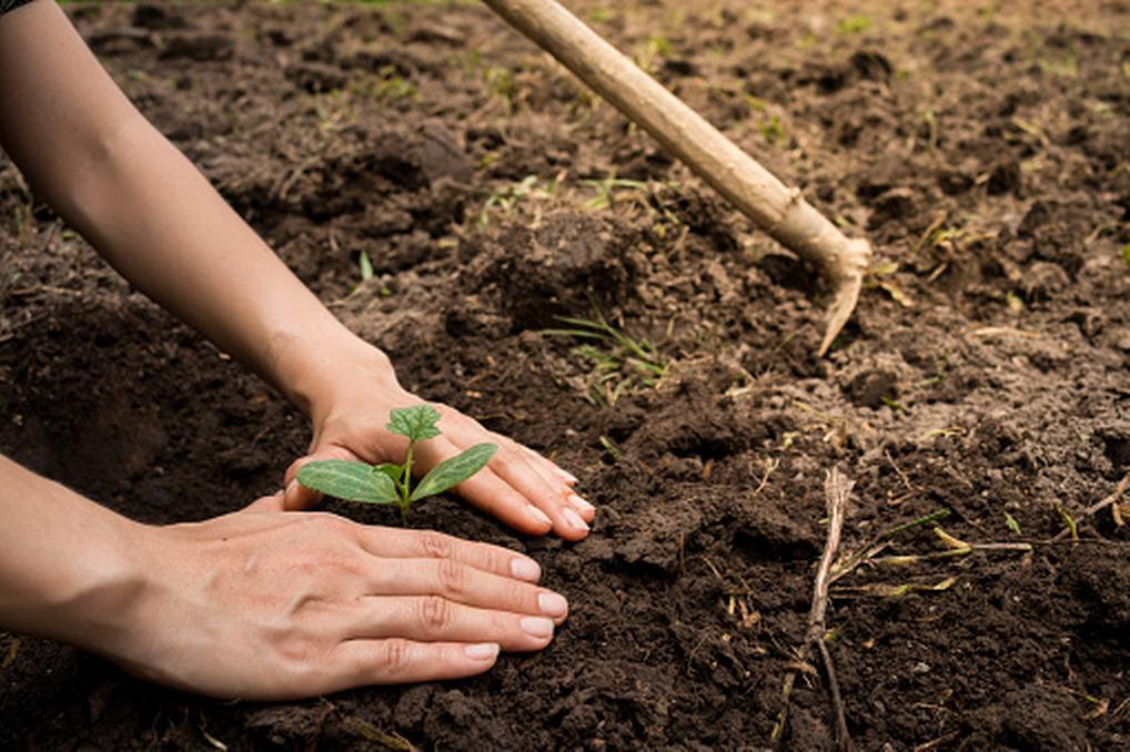 foto Filipinas obligará a plantar árboles a cada estudiante graduado 29 mayo 2019