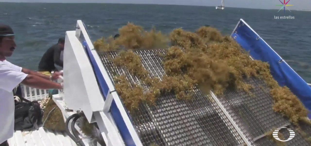 Foto: Implementan Medidas Contra Sargazo Playas Mexicanas 15 de Mayo 2019