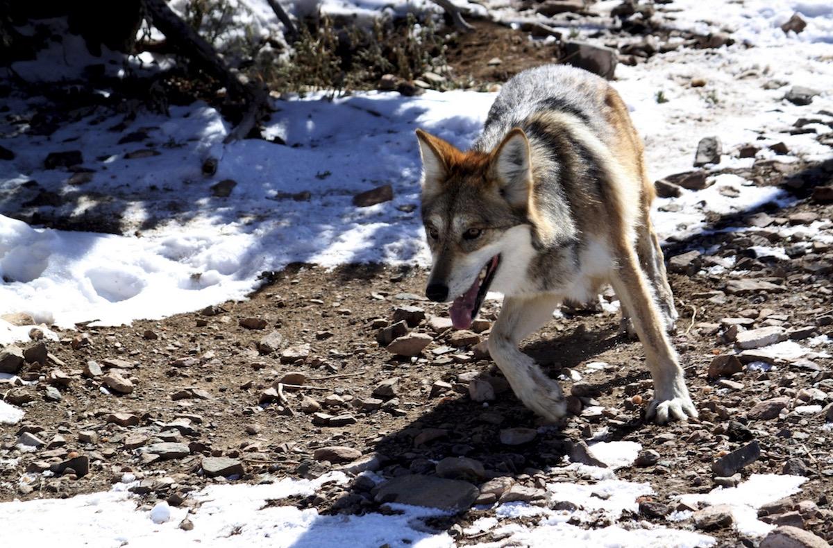 Especies-amenazadas-biodiversidad-peligro-extincion-Mexico