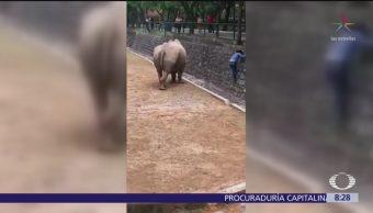 Mujer arriesga su vida por rescatar celular en zoológico de Nuevo Léon