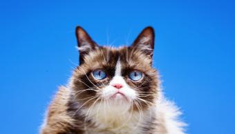 Foto Muere Grumpy Cat, la famosa gatita de los memes 17 mayo 2019