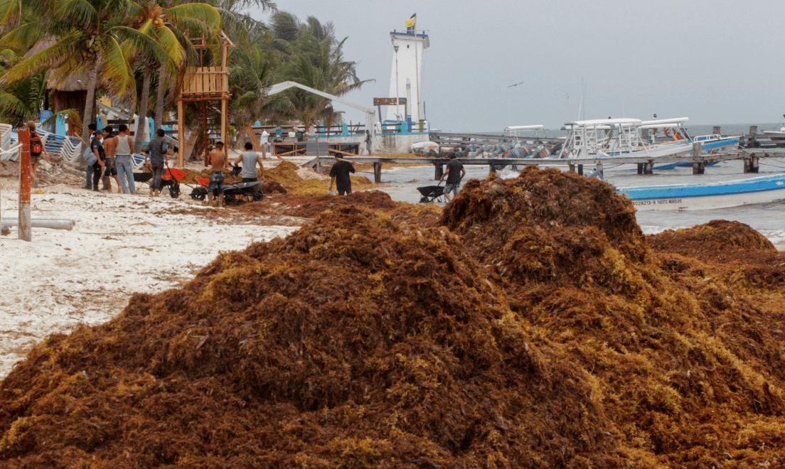 Foto: Pescadores limpian el sargazo en Puerto Morelos, Quintana Roo,5 de mayo de 2019, México