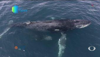 FOTO: Por el Planeta: Acoso de embarcaciones a ballenas, 1 MAYO 2019