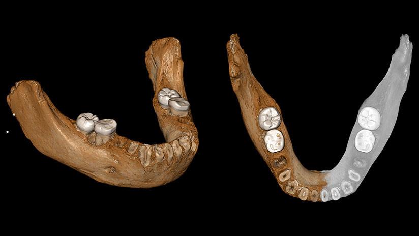 Proyección de la mandíbula en 3D realizada por los científicos analistas (Nature)