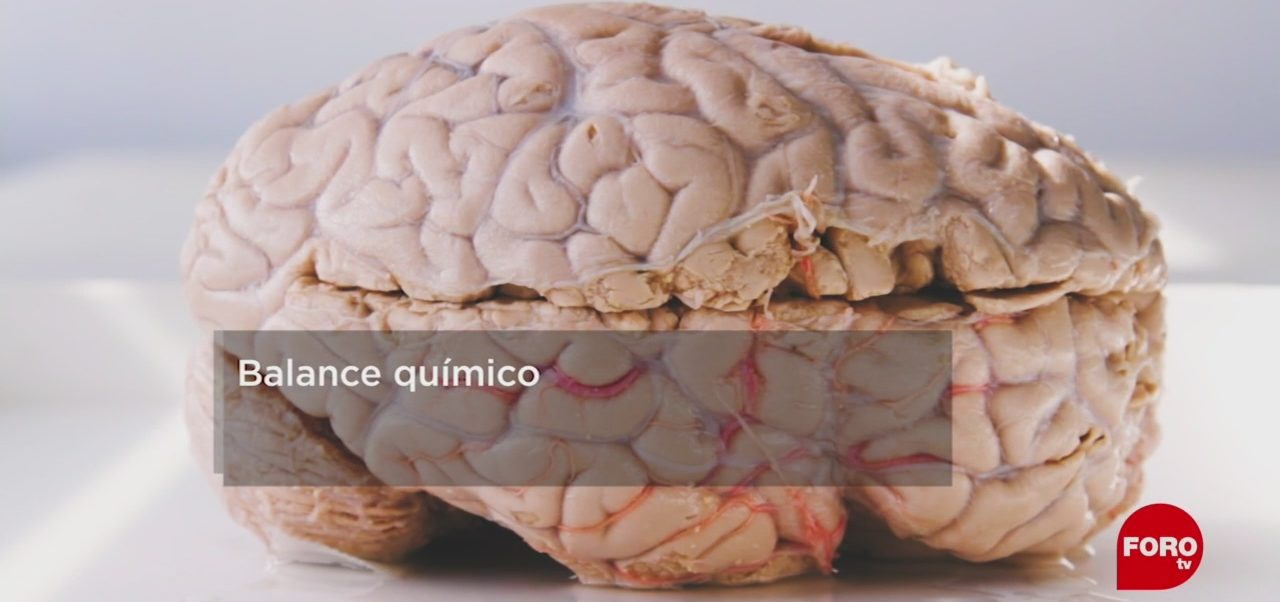 FOTO: ¿Qué necesitas para tener un cerebro feliz?, 11 MAYO 2019