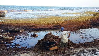 Sargazo: Así se recolecta en Tulum y Puerto Morelos para limpiar las playas