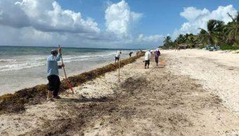 Foto:Brigadistas se encargan de recolectar el sargazo que llega a las costas de Quintana Roo, 18 mayo 2019