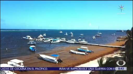 Sociedad civil activa protocolo contra sargazo en Puerto Morelos