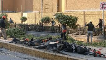 Congreso CDMX pide a autoridades actuar contra tala de árboles