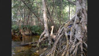 Foto: Zona de manglares, 3 de diciembre de 2019. www.gaceta.unam.mx