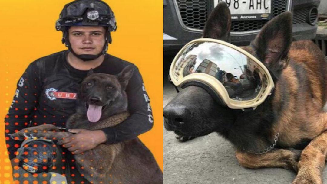 Foto Piden ayuda para Chichi, perro rescatista en el sismo del 19-S 28 junio 2019