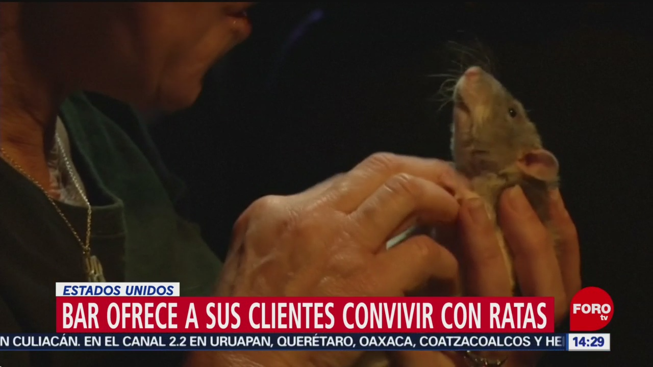 FOTO: Bar ofrece a sus clientes convivir con ratas en Estados Unidos, 15 Junio 2019