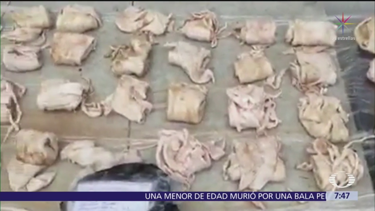Decomisan buches de totoaba en California