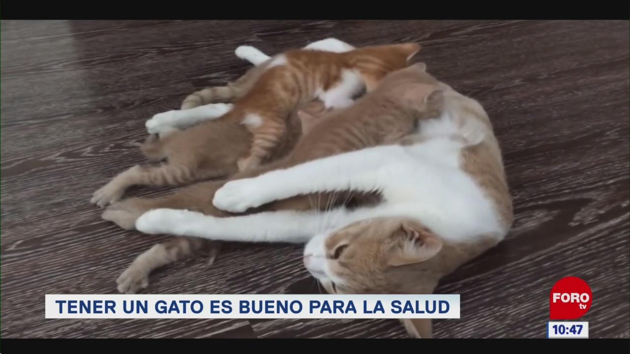 FOTO: Tener un gato es bueno para la salud